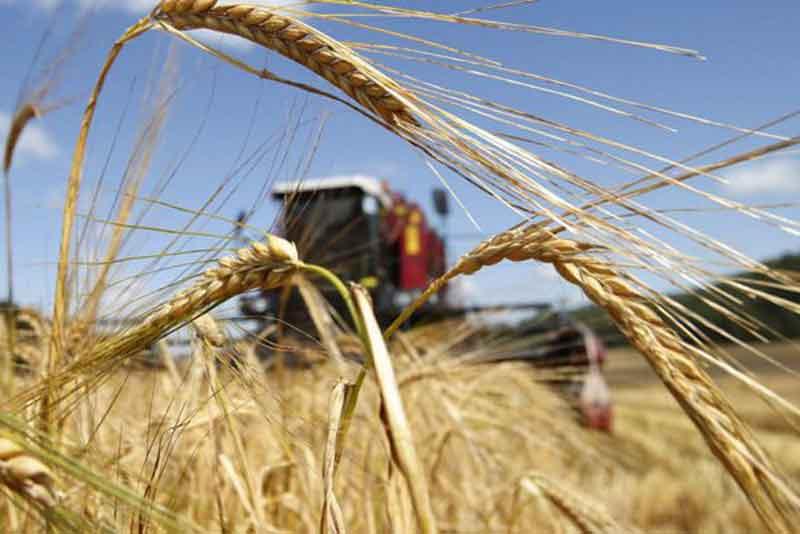 Аграрии Оренбуржья намолотили первый миллион тонн зерна